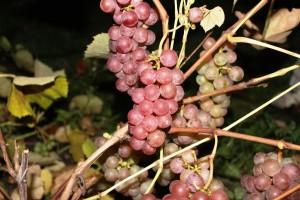 vynmedis2